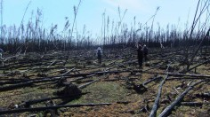 Boreal Forest Fires Could Release Deep Soil Carbon (IMAGE)