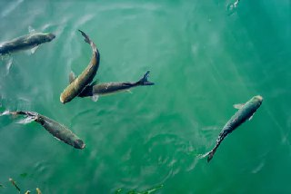 Guide to Starting an Eco-Friendly Fish Farm