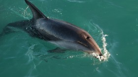 86 Dolphins Founds Dead in a Beach of Hottentots Bay Namibia