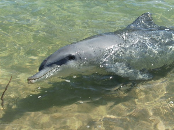 Wild Dolphins Apparently Have a Range of Personalities