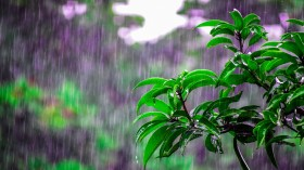 The Evolution of Rain's Distinct Scent and Its Role in Bacterial Propagation