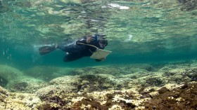 Corals That Are Heat Resistant Have Been Successfully Developed by Scientists to Combat Coral Bleaching