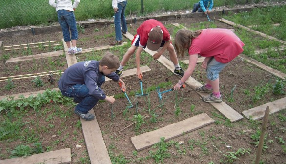 School Gardens: A Must for Learning