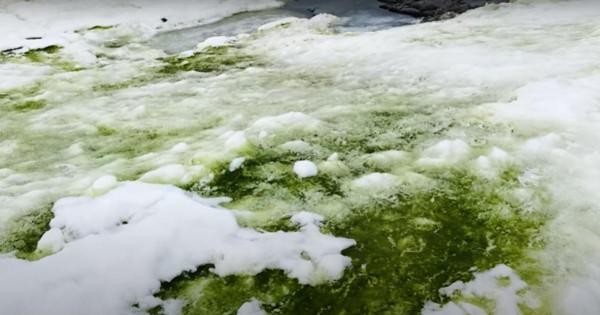 Green ice in Antarctica