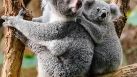 Queensland Wind Farm Project Gets a No to Save Old-Growth Forest