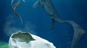 New Study Says Mystery Fossil Egg Could Have Been Laid by a Giant Sea Reptile