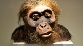 Nature World News - Preserved Monkey
