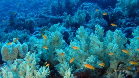 Researchers' DIY Equipment Discovers Soft Coral Garden in the Deep Sea in Greenland