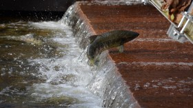 Nature World News - Northern Fish Are Tough, but Climate Change Is Causing Some to Dwindle