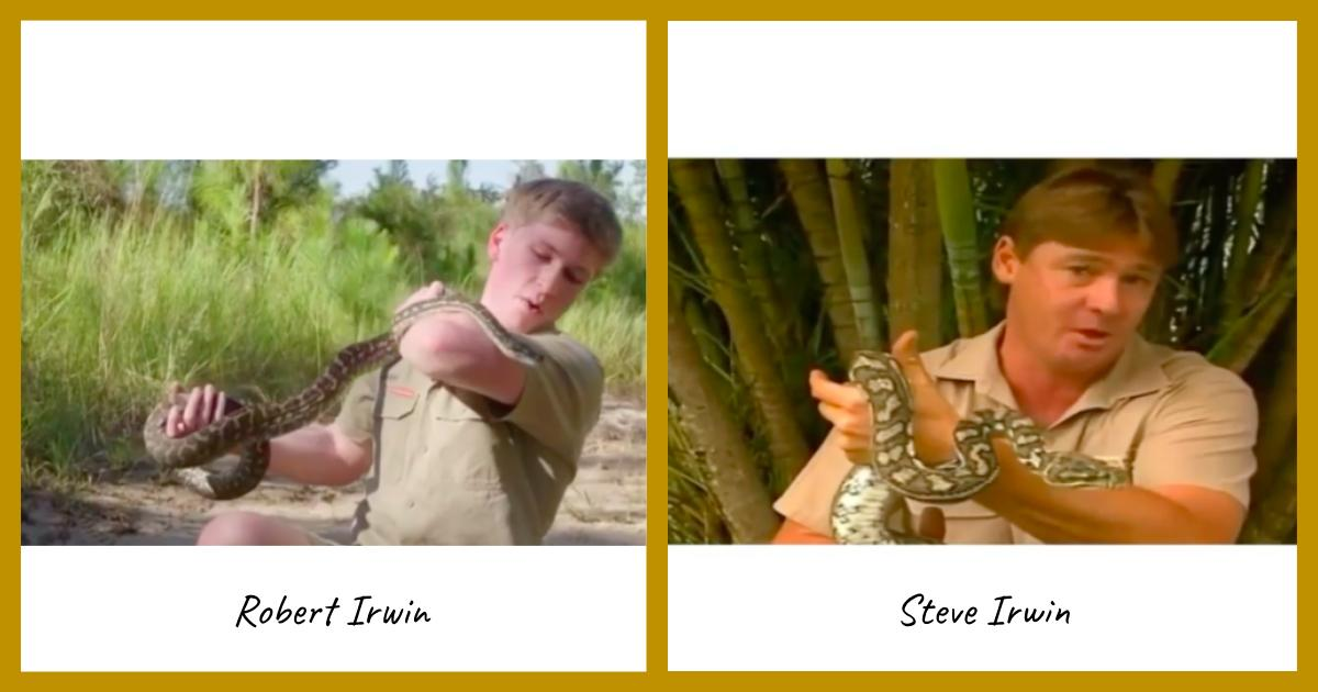 Video Like Father Like Son Robert Irwin Gets Bitten By A Python Just Like His Dad Decades Ago Nature World News