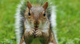 Squirrel in Colorado tested positive for Bubonic Plague