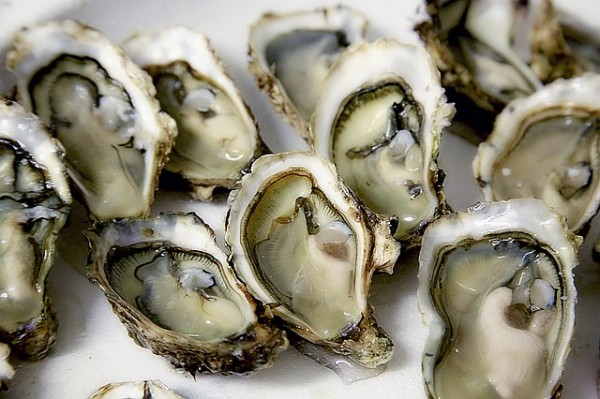 Researchers Found Ancient Native Americans Sustainably Harvested and Managed Oyster Reefs