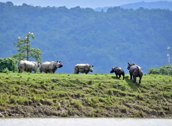 Assam Flooding Toll:  Scores of People Killed, 2.5 Million Evacuated and 9 Endangered Rhinos Dead