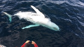 5 Reasons Why Whale Watching May be Harmful to Whale's Health