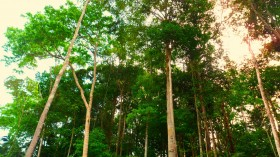 Small Drought-Resilient Trees May be the Future of the Amazon Rainforest