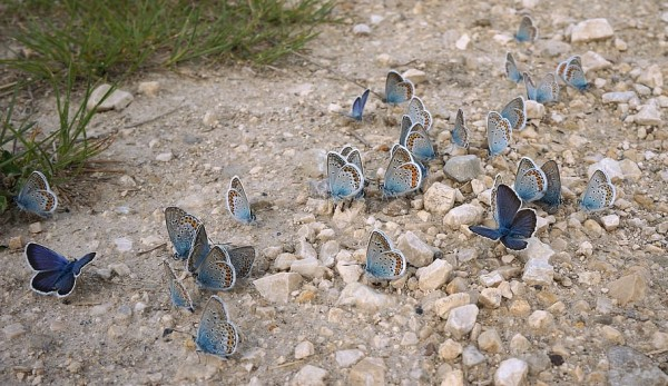 Nature World News - Insect Apocalypse? Not So Fast, at Least in North America