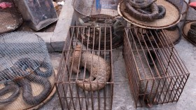 Nature World News - Risk of Coronavirus Transmission Found to be Higher in Wildlife Trade Supply Chain