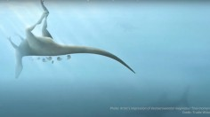Nature World News - New Dinosaur Species Related to the T. Rex Found on the Isle of Wight