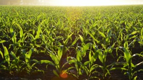 Practicing Soil Conservation Benefits Farmers and Their Crops, Study Says