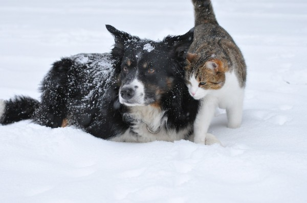 Cats and Dogs: Five Things You Should Know about Colorblindness and other Senses