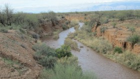 Biodiversity Returns in Dried-Up Desert Riverbeds Added with Treated Effluent Water