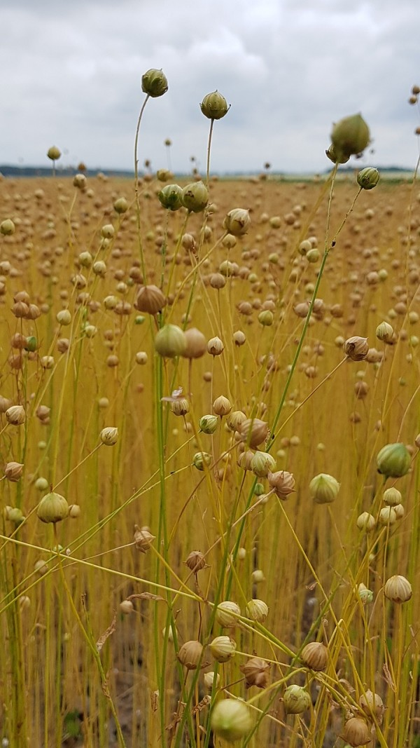Researchers Publish Checklist of Breeding Guidelines to Improve and Adapt Crops for Climate Change