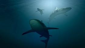 Conservationist Groups: Shark-based Coronavirus Vaccine will Kill half a Million Sharks