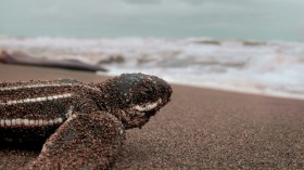 Sightings of Sea Turtles in the Ireland & UK Have Been Mysteriously Declining