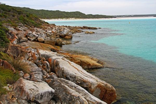 Scientists Restore Seagrasses and Rejuvenate Marine Life in Coastal Bays
