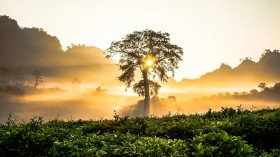 Scientists Say Proper Reforestation in Tropical Forest and Savannah Biomes in Africa is Crucial