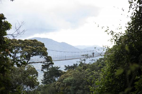 Aerial Bridges: Overpasses of Threatened wildlife Across Fragmented Landscapes