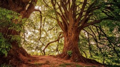 Study Finds that the Largest Trees Capture Much More Carbon and Dominate Forest Carbon Storage