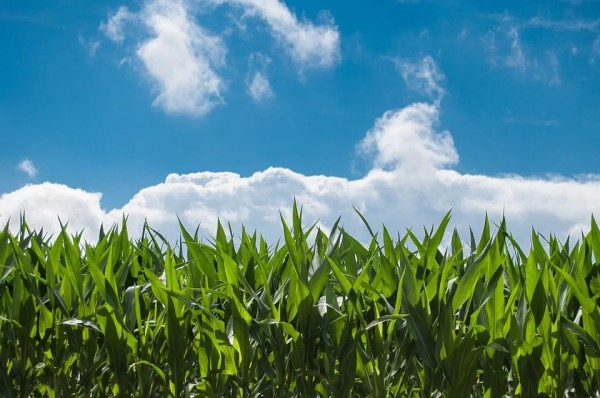 US Agriculture, in Particularly Livestock and Crop Production, Has Lessened Water Use