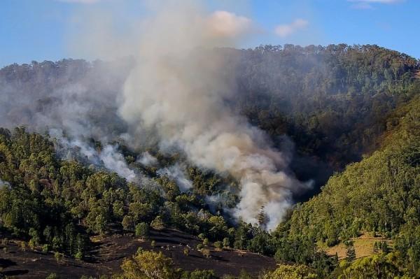 Changes in the Behavior of Fires Threaten Over 4,400 Species Worldwide