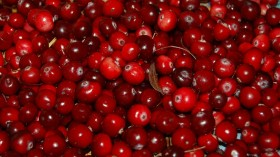 Thanksgiving Crop Cranberry Affected by Extreme Weather in the US