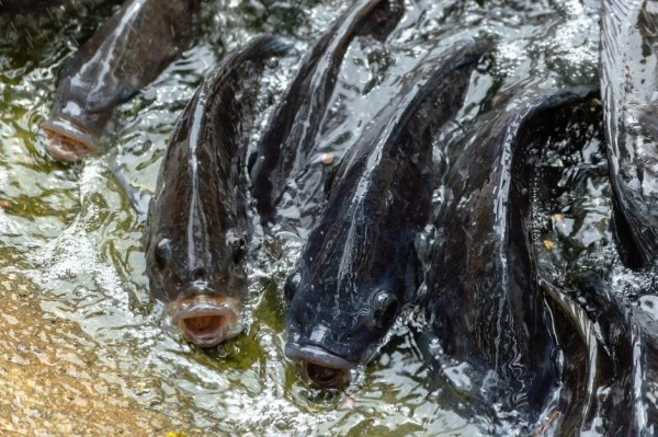 How We Can Run a Successful Fish Farming and What Are Major Techniques Used