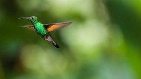Study: Clean Air Act Averted the Loss of 1.5 Billion Birds in the Past 40 Years