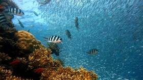Using the Ocean to Improve Food Security, Biodiversity, Climate Change, and the Economy