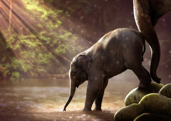 Happening Every 27 Million Years: Mass Extinctions of Land-Dwelling Animals