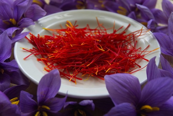 Climate Change Impacts Kashmir's 'Red Gold' Saffron Crop