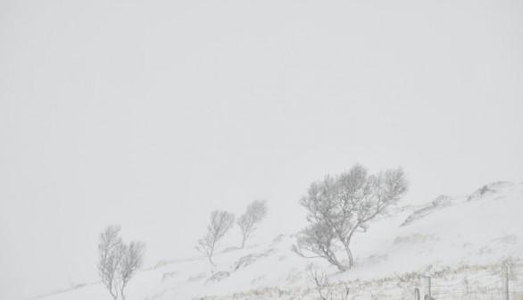 Intense snow