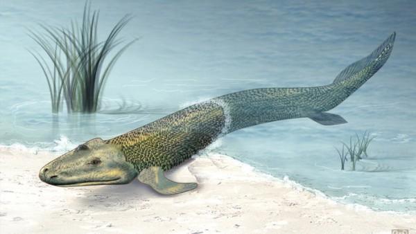 fishapod