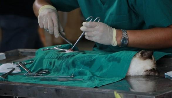 Animal Surgery