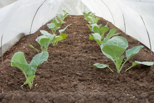 Helping the Environment with the Proper Agricultural Covers