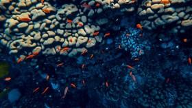 Oceanic Creature