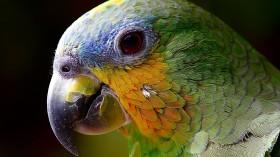 Can Birds Predict the Future?