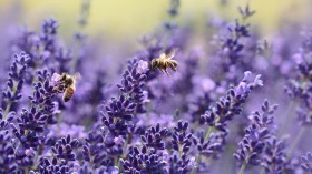 Banned Bee-Killing Pesticide Allowed for Special Use in England