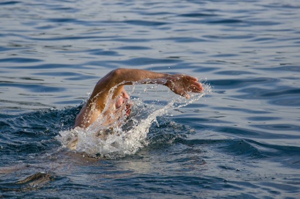Swimmers are more likely to be stung