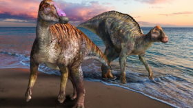 Duckbilled Dinosaur Fossils Discovered to be from a New Genus And Species