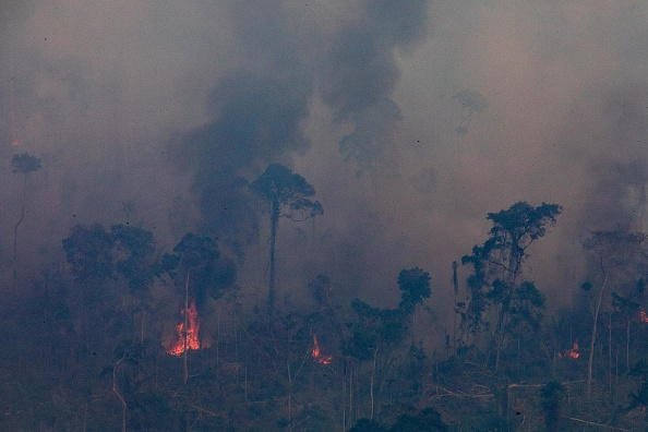 Transformation of amazon rainforest due to climate change and deforestation